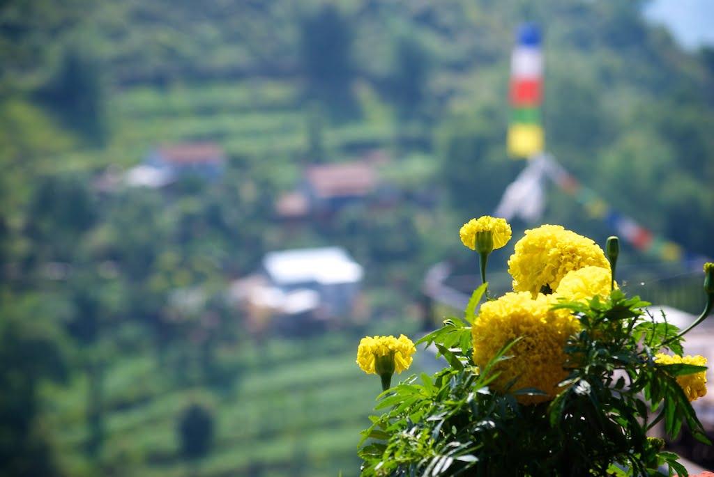 Essay about pokhara